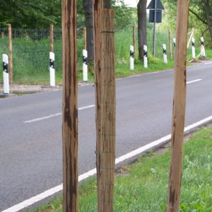 Schilfmatte_Verdunstungsschutz_Baum3