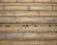 bambusrohr-guadua-natur