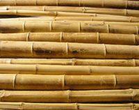 Bambusrohr-moso-natur