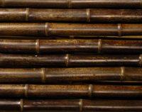 bambusrohr-nigra-braun-schwarz