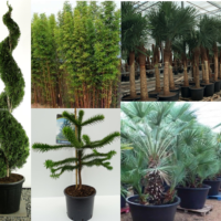 Kategoriebild_Pflanzen