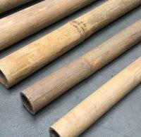 bambusrohr-apus