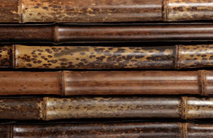 bambusrohr-boryana-tigerbambus