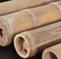 bambusrohr-petung-riesenbambus