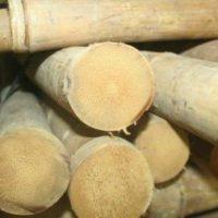 bambusrohr-tam-vong-2