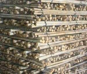 bambusrohr-tam-vong