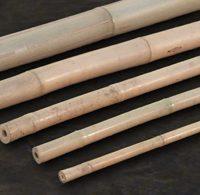bambusrohr-tonkin