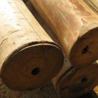 bambusrohr-tre-gai-2