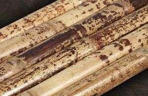 bambusrohr-tutul-tigerbambus